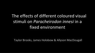 The effects of different coloured visual stimuli on  Paracheirodon innesi  in a fixed environment