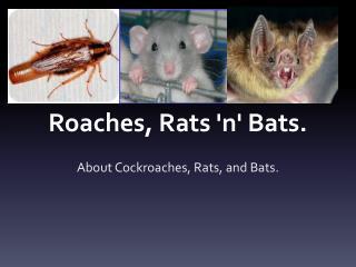 Roaches, Rats 'n' Bats.