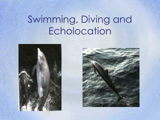 Swimming, Diving and Echolocation