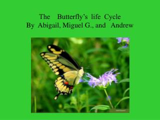 The    Butterfly's  life  Cycle   By  Abigail, Miguel G., and   Andrew