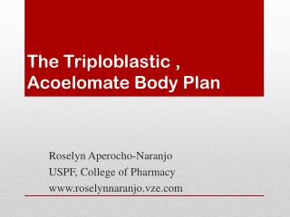 The Triploblastic , Acoelomate Body Plan