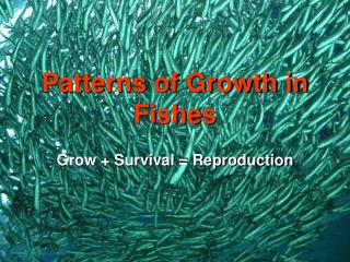 Patterns of Growth in Fishes