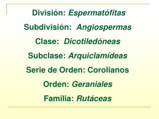 División:  Espermatófitas Subdivisión:   Angiospermas Clase:   Dicotiledóneas