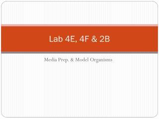 Lab 4E, 4F & 2B