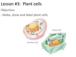 Lesson #3:  Plant cells