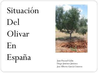 Situación  Del O livar E n  España