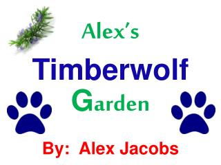 Alex's  Timberwolf  G arden