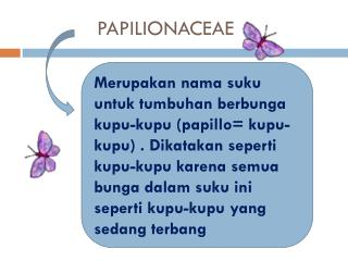 PAPILIONACEAE