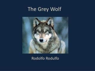 The Grey Wolf