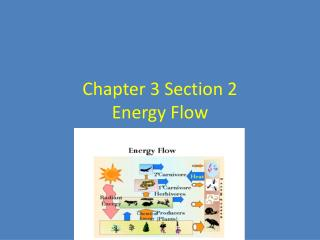 Chapter 3 Section 2  Energy Flow
