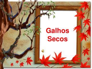 Galhos Secos