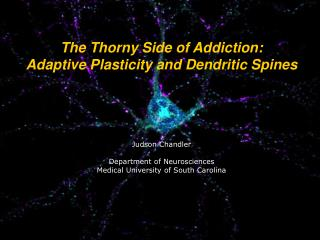 The Thorny Side of Addiction:  Adaptive Plasticity and Dendritic Spines Judson Chandler