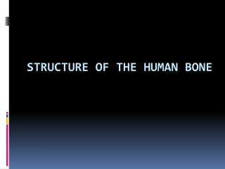Structure of the Human Bone