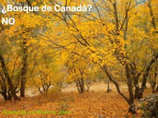 ¿Bosque de Canadá?