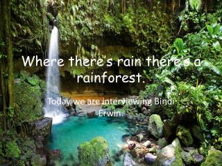 Where there's rain there's a rainforest.