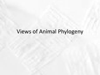 Views of Animal Phylogeny