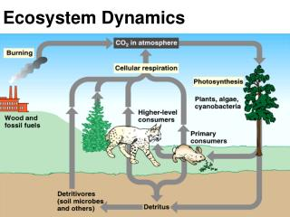 Ecosystem Dynamics
