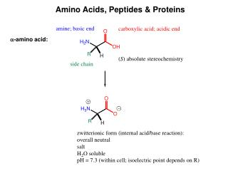 Amino Acids, Peptides & Proteins