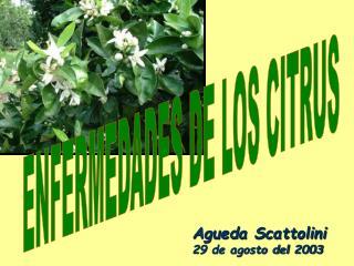 Agueda Scattolini 29 de agosto del 2003