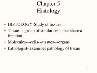 Chapter 5 Histology