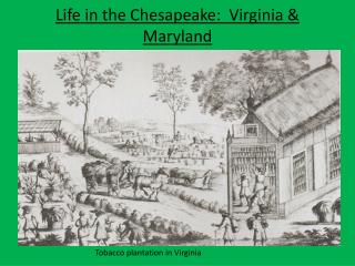 Life in the Chesapeake:  Virginia & Maryland