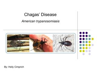 Chagas' Disease American trypanosomiasis