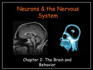 Neurons & the Nervous System