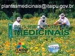 COMIT S GESTORES: O NOSSO PROJETO PLANTAS MEDICINAIS