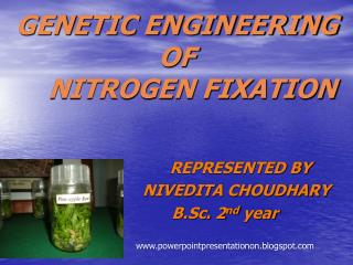 GENETIC ENGINEERING OF     NITROGEN FIXATION