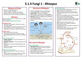 3.1.4 Fungi 1 -  Rhizopus