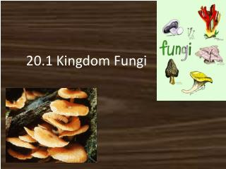 20.1 Kingdom Fungi