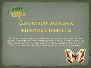 Самые прожорливые животные планеты