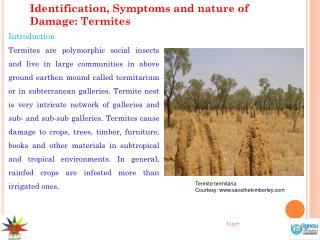 Identification, Symptoms and nature of Damage: Termites