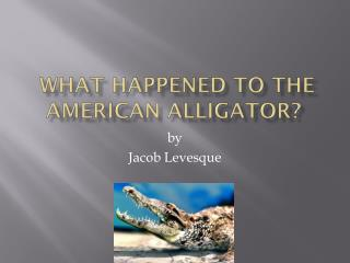 What Happened to the American Alligator?