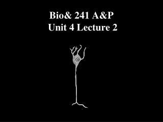 Bio& 241 A&P   Unit 4 Lecture 2