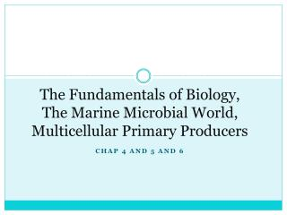 The Fundamentals of Biology, The  Marine Microbial  World,  Multicellular  Primary Producers