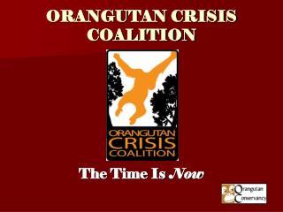 ORANGUTAN CRISIS COALITION