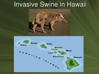 Invasive Swine in Hawaii