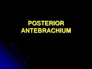POSTERIOR ANTEBRACHIUM