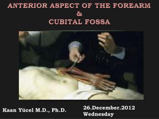 ANTERIOR ASPECT OF THE FOREARM & CUBITAL FOSSA