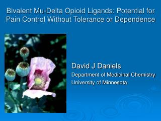 Bivalent Mu-Delta Opioid Ligands: Potential for Pain Control Without Tolerance or Dependence