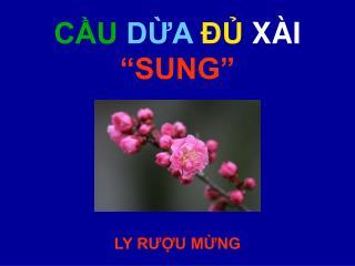 """CẦU DỪA ĐỦ XÀI """"SUNG"""""""
