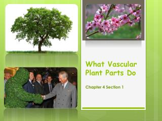 What Vascular Plant Parts Do