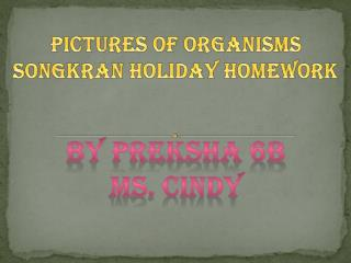 Pictures of organisms Songkran Holiday Homework