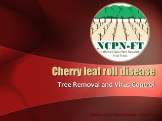 Cherry leaf roll disease