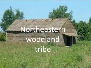 Northeastern woodland tribe