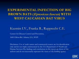 EXPERIMENTAL INFECTION OF BIG BROWN BATS ( Eptesicus fuscus ) WITH WEST CAUCASIAN BAT VIRUS