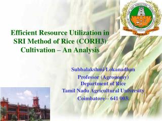 Efficient Resource Utilization in  SRI Method of Rice (CORH3)  Cultivation – An Analysis