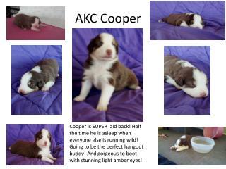 AKC Cooper