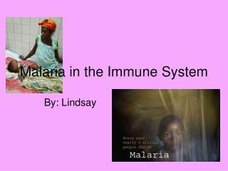 Malaria in the Immune System